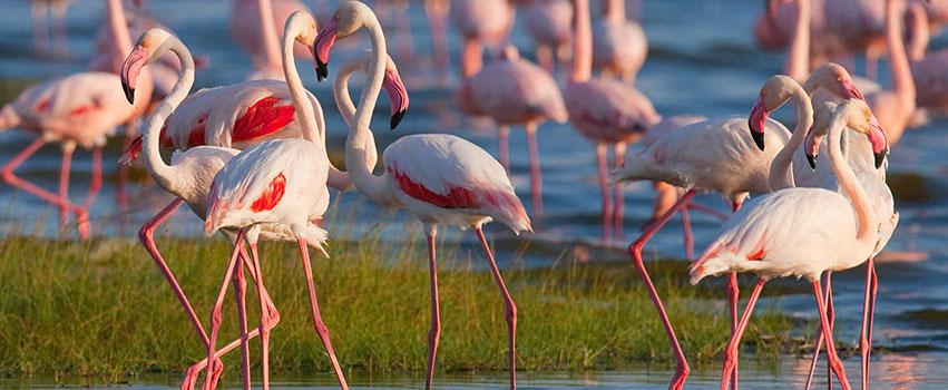 2 Days Lake Nakuru National Park Safari