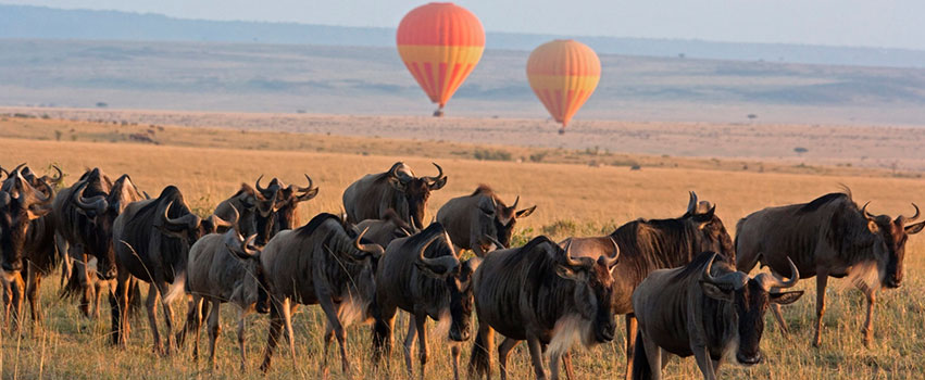 3 Days Masai Mara Game Reserve Safari Package