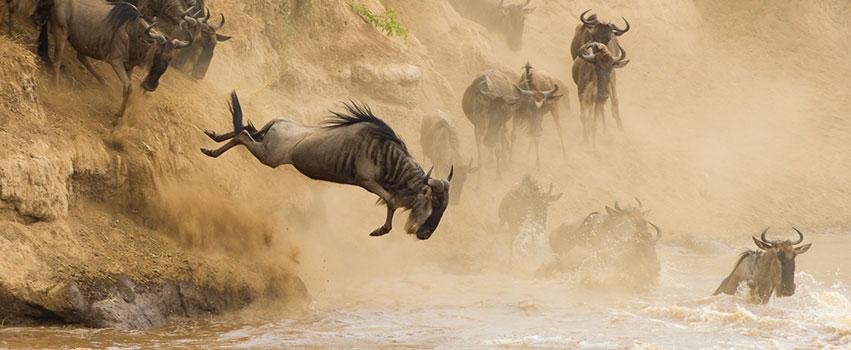 4 Days Great Masai Mara Migration Safari