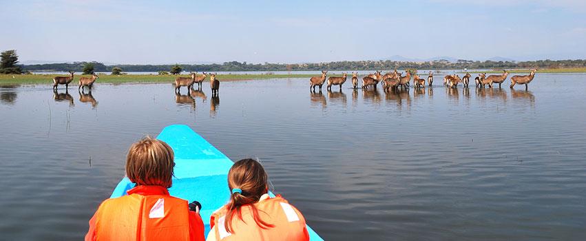 4 Days Lake Naivasha & Masai Mara Game Reserve Safari