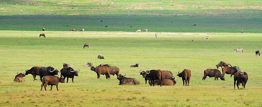 4 Days Ngorongoro Crater & Serengeti National Park Safari