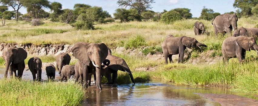 4 Days Tarangire, Ngorongoro Crater & Lake Manyara Safari