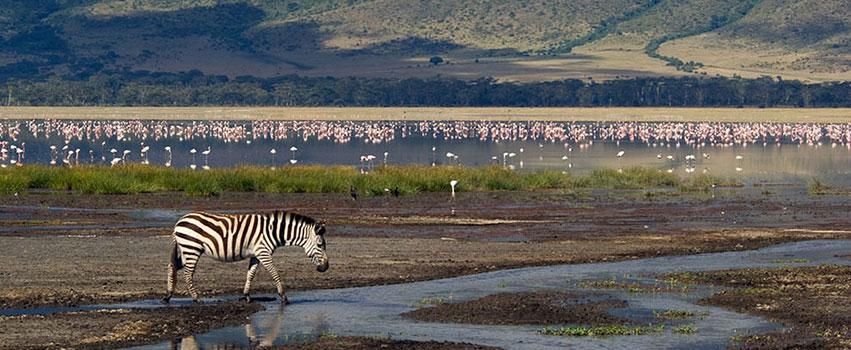 6 Days Lake Manyara, Ngorongoro Crater & Serengeti Safari