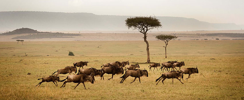 9 Days Masai Mara, Lake Nakuru, Amboseli, Serengeti, Ngorongoro Crater Safari