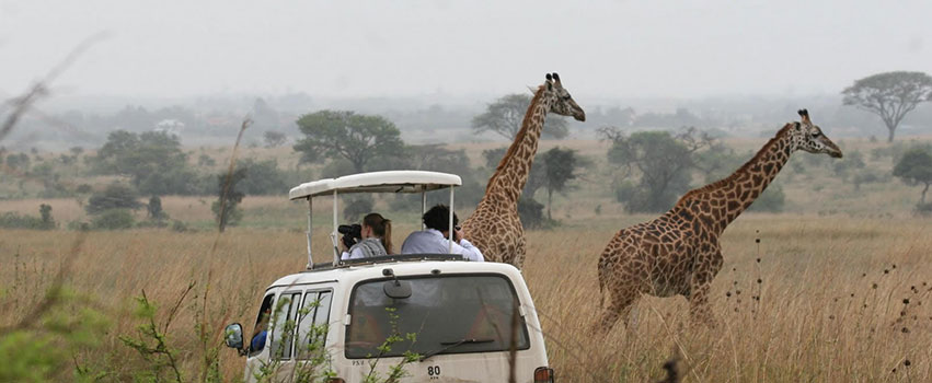 Nairobi National Park Day Trip